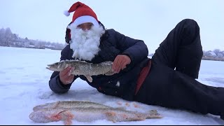 Зимняя рыбалка от Михалыча. Ловля щуки на жерлицы