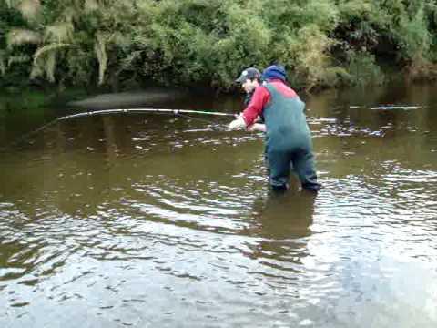 Pesca Salmón Salar, Chiloé