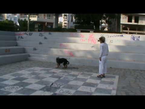εκπαιδευση σκυλου σε βασικη υπακοη k9elite .MPG