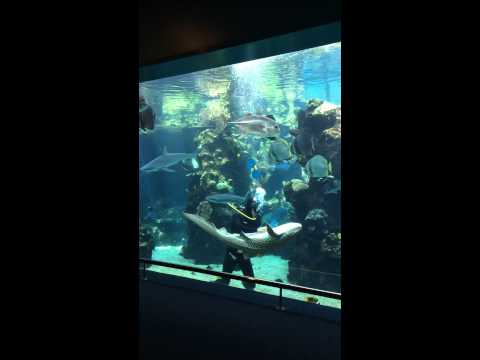 un sub sta pulendo la vasca ma arriva uno squalo e...