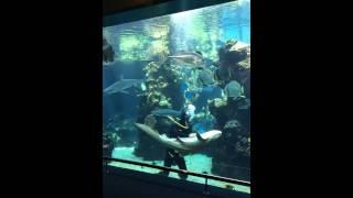 Nouméa : le requin vient chercher son câlin