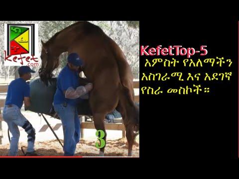 Kefet Top-5 አምስት የአለማችን አስገራሚ እና አደገኛ የስራ መስኮች።