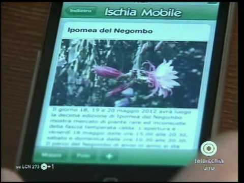 Ischia Mobile | Procida Mobile | Capri Mobile - L'intervista di Carmen Cuomo per Teleischia