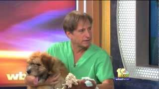 Dr. Kim Hammond Answers Questions About Skin Conditions in Dogs and Neutering Older Dogs