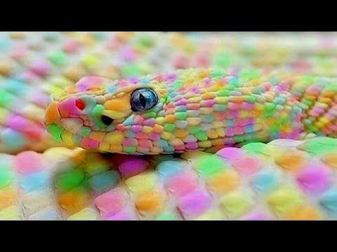 10 Serpientes Exóticas Únicas En El Mundo