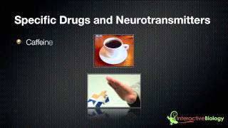 021 The Mechanism Of Addiction