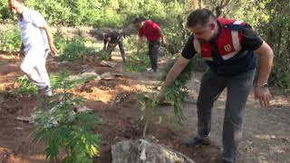 MUĞLA'nın Fethiye İlçesi'ndeki 1965 rakımlı Babadağ'ın eteğinde 348 kök hintkeneviri yetiştiren 46 yaşındaki Atilla T., çalıların arasında saklanırken jandarma tarafından yakalandı.tilla T., a 46-year-old man who trained 348 root hunting houses on the edge of Mugla's Fethiye District of Babelag in 1965, was caught by the gendarmerie while being kept among the workers.MUĞLA'nın Fethiye İlçesi'ndeki 1965 rakımlı Babadağ'ın eteğinde 348 kök hintkeneviri yetiştiren 46 yaşındaki Atilla T., çalıların arasında saklanırken jandarma tarafından yakalandı. Hintkenevirleri sökülmek üzere imha edilirken, patika yollardan ormanın içine taşınmış tonlarca su jandarma ekiplerini de şaşırttı.Atilla T., a 46-year-old man who trained 348 root hunting houses on the edge of Mugla's Fethiye District of Babelag in 1965, was caught by the gendarmerie while being kept among the workers. While the Hinekinari were being dismantled to be dismantled, they were amazed at the tons of water gendarmerie crews that moved into the forest from the trail path.Dünyaca ünlü yamaç paraşütü merkezi Babadağ'ın eteğinde hintkeneviri yetiştirildiği istihbaratını alan Fethiye İlçe Jandarma Komutanlığı İstihbarat Timi, geçen 12 Temmuz'da harekete geçti. Ormandaki patika yollarda 2 gün süren aramanın sonunda, bugün sabah saatlerinde kenevir tarlasının yeri tespit edildi. Tel örgülerle çevrili tarlanın içinde çadır ve yatak olduğunu gören ekipler, çevrede arama yaptı. Bu sırada çalıların içine saklanmış, jandarma ekiplerinin uzaklaşmasını bekleyen Atilla T. gözaltına alındı.Fethiye County Gendarmerie Command Intelligence Team, which received intelligence that the hippocampal cultivated on the edge of the world famous paragliding center Babadağ, took action last July 12th. At the end of the search for two days on footpaths in the forest, the location of the hemp field was determined in the morning hours today. The teams, who saw the tent and the bed in the field surrounded by wire mesh, searched around. Meanwhile, 
