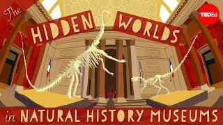 The hidden worlds within natural history museums – Joshua Drew