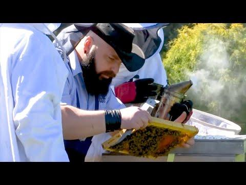 Häftlinge als Imker: Die Knast-Bienen von Remscheid