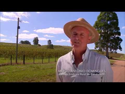Violência de quadrilhas de ladrões de gado faz criadores deixarem o campo