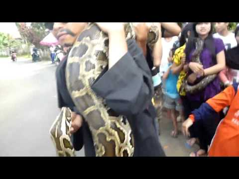 alivenotdead - World's Biggest Snake NEW 2014 world's biggest snake found alive not Dead NEW Video Giant Huge EVER, World biggest snake video, world's biggest snake found a...