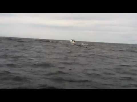 Il salto acrobatico della balena