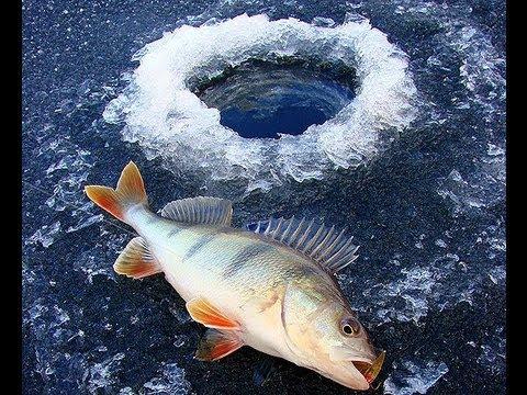 Wędkarstwo Podlodowe,spod lodu w zimie Ice Fishing Karasie i okonie na mormyszkę