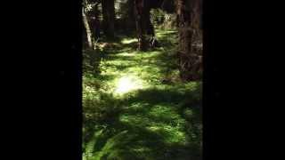 Ukiah (CA) United States  City new picture : Montgomery Woods in Ukiah ca
