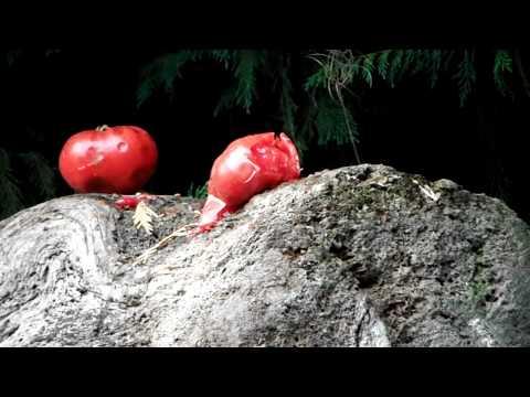 rotten tomatoes 29 teams idea