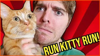 Shane Dawson Did SOMETHING To His Cat?.. 😐🙀