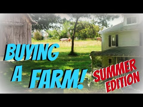 BUYING A HORSE FARM SUMMER EDITION  Day 196 (07/15/18)