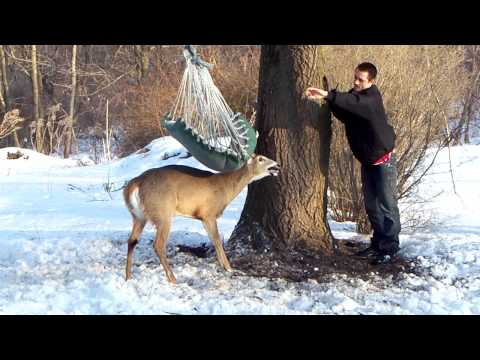 Deer stuck in hammock (part 2)