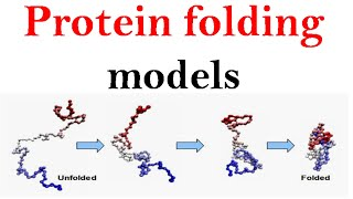 Protein folding models