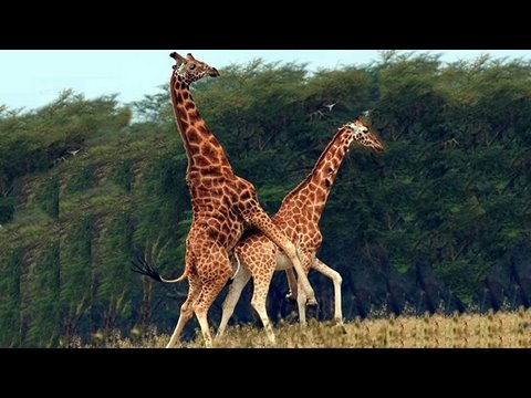 Giraffe Love and Other Questions ANSWERED