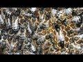 Videopaseka 2: Болезни пчёл