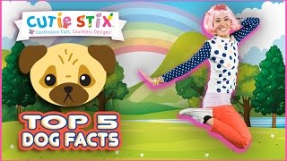 """Learn the top 5 facts about your pet dog that you probably didn't know!Top 5 Fun Dog Facts You Didn't Know!!  Official Cutie StixFrom the makers of Orbeez and Pom Pom WowThe official YouTube channel of Cutie Stix""""Continuous Cuts, Countless Creations! Seriously Cute!""""1) Cut the stix to create beads. Use the CORING UNIT to core the beads.2) Create necklaces, bracelets, and more by using the threader.3) Show off your finished jewelry design. Be your own designer!From the makers of Orbeez and Pom Pom Wow by Maya ToysSUBSCRIBE:https://www.youtube.com/channel/UCHx4Hfo0-MpUEPRTflJjWLw?sub_confirmation=1Maya Toys 2016http://www.CutieStix.com"""