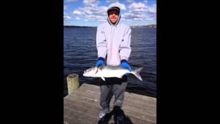 Toms River (NJ) United States  City new picture : Bluefish Blitz 2015 - Toms River NJ