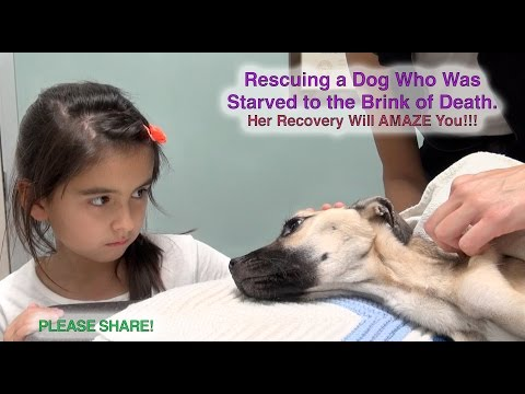 Little Girl Stares into The Eyes of a Dying Dog. What Follows Seconds Later? A Miracle