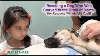 Dziewczynka patrzyła się w oczy umierającego psiaka. Chwilę później stał się cud!