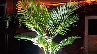 BLUMAT GÜNSTIG KAUFEN: http://amzn.to/2piI5a0SOLAR LICHTERKETTE: http://amzn.to/2qzesUlKeine vertrockneten Balkonpflanzen mehr und immer ein angenehmes sommerliches Ambiente.Ich möchte heute ein automatisches Bewässerungssystem installieren und testen. Gleichzeitig möchte ich eine Möglichkeit der dezenten Beleuchtung dieser Topfpflanze zeigen, für eine angenehme Balkonatmosphähre . Alle Maßnahmen erfordern keinen Strom oder Wasseranschluss. Die verwendeten Produkte habe ich selbst erworben und es handelt sich hierbei nicht um Produktwerbung sondern um Ideenvorschläge.Zunächst werde ich nun ein automatisches Bewässerungssystem installieren. Dazu verwende ich 4 Stück dieser Bewässerungstonkegel mit dem Namen Blumat XL. Für diese Topfgröße werden laut Hersteller 4 Stück benötigt. Bei diesem System soll die Topferde das Wasser durch Kapillarwirkung aus den feinen Öffnungen des Tons aufsaugen. Der Kegel soll dann über einen kleinen Schlauch frisches Wasser ansaugen und so eine stetige Befeuchtung der Erde gewährleisten. Als Wasserreservoir verwende ich diesen 30L Kanister, den ich hinter den Topf postiere. Wichtig ist dabei, dass der Kanister ungefähr auf der gleichen Höhe wie der Topf steht. Dafür muss ich den Kanister in diesem Fall auf einen stabilen Kasten stellen. Ich denke ich habe einen guten und sicheren Platz für den Kanister gefunden und werde ihn nun mit Leitungswasser füllen. In diesem Fall verwende ich einen gebrauchten Kanister, daher ist es sehr wichtig sicherzustellen, dass sich keine schädlichen Reststoffe darin befinden. Den vollen Kanister stelle ich dann an den vorgesehen Platz. Nun müssen die Tonkegel vollständig mit Wasser gefüllt werden. Dazu entnehme ich die Kappe und tauche den Kegel und den Schlauch in eine Schüssel mit Wasser bis alles vollständig gefüllt ist. Am besten den Kegel unter Wasser wieder verschließen. Diese Prozedur führe ich bei allen vier Bewässerungskegeln durch. Mit einem Erdspieß lockere ich die Palmenerde etwas an der vorgeseh