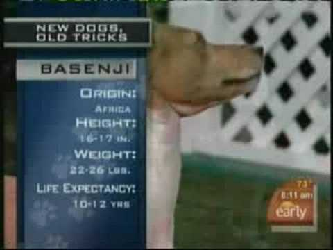 Basenji on CBS Early Show