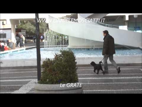 Vendita educazione del cane a domicilio, roma
