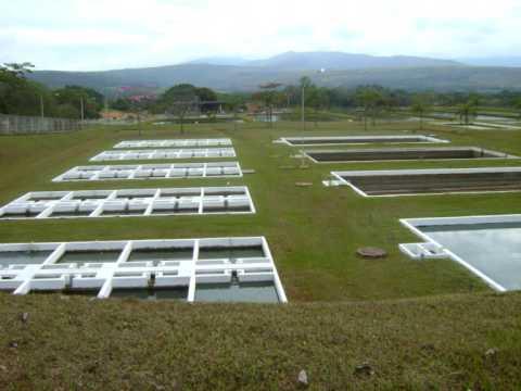 Sâo Roque de Minas 2009