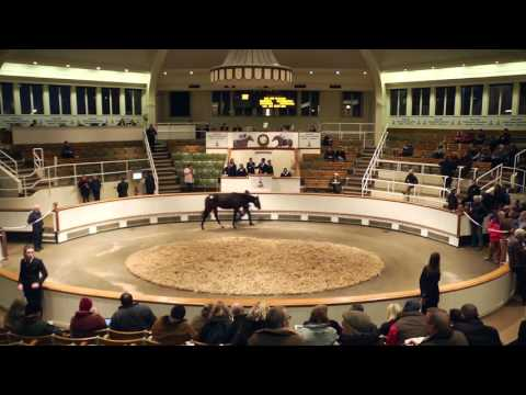 Tattersalls December Yearling Sale 2015 Video Review