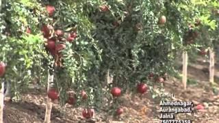 Variedades indias y cultivos