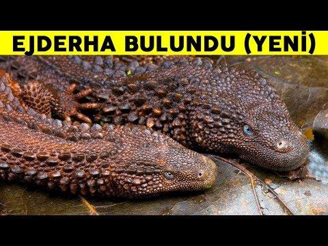 Borneo Adasında Ejderhaya Benzeyen Bir Yaratık Keşfedildi