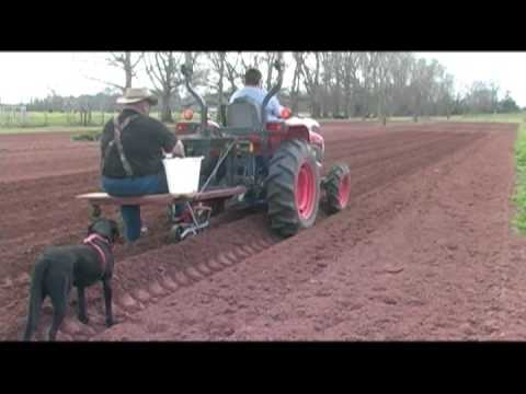 planting - Vegetable Garden Fertilizing and planting your sweet corn. Visit The Bayou Gardener in Avoyelles Parish Louisiana - Cajun Country at http://www.thebayougarde...