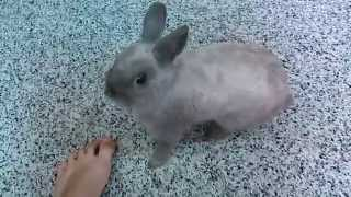 Download Lagu Bunny at 8 months old Mp3