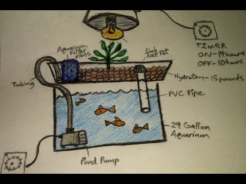 Aquaponics for Dummies – The Easiest DIY Indoor Aquaponic System