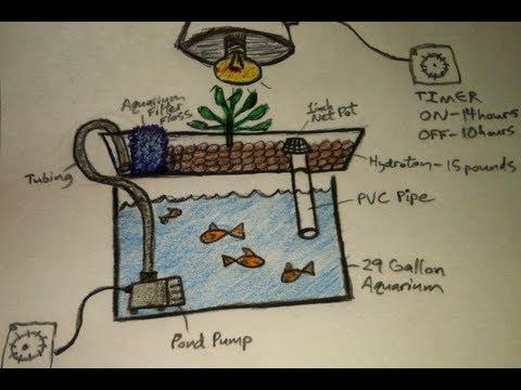 Aquaponics for Dummies – The Easiest DIY Indoor Aquaponic System