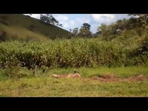 (Stabilized Version) Viagem a Crindiubas Guiricema 2013 parte II