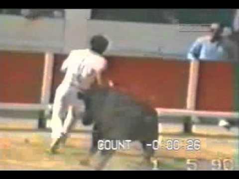 Bull  horn in ass