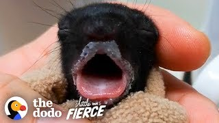 Furless Baby Squirrel Grows Up to be Cute... | The Dodo Little But Fierce by The Dodo