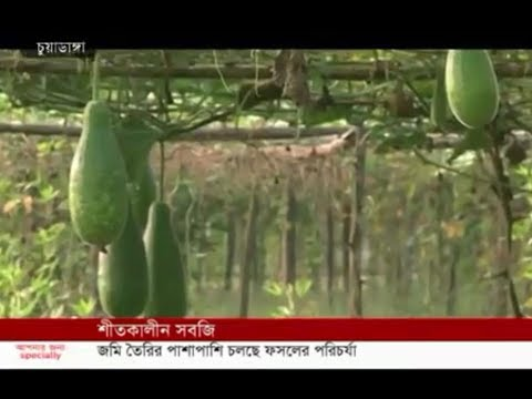 Winter vegetables (09-10-2019) Courtesy: Independent TV