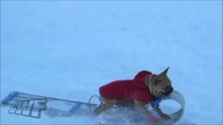 Nonton Cute Dog Movie   Dog Steals Snow Sled Away From Boy Film Subtitle Indonesia Streaming Movie Download