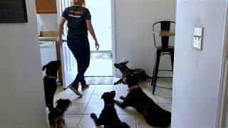 In Home Dog Bootcamp Houston, Texas