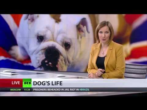 dogs - In the UK, dog owners' are said to be 'killing their pets with kindness' with Britain's canines now some of the fattest in the world. And as RT's Andrew Farmer reports, it's not just portly...
