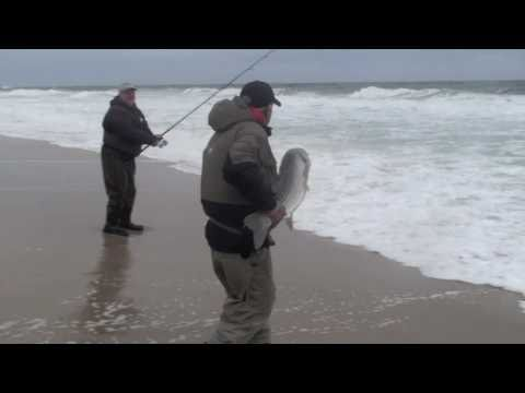 Big Striped Bass Caught in the Jersey Shore Surf – Nov 2010