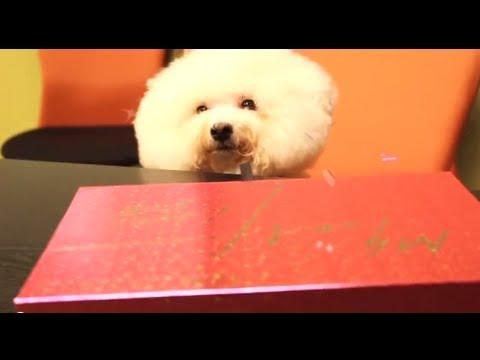 蔡依林 Jolin Tsai - Myself 世界巡迴演唱會 Live DVD-Whoohoo推薦篇