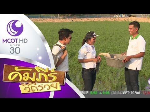 ข้าวปลอดสาร ข้าวอารียา อ.ด่านมะขามเตี้ย จ.กาญจนบุรี (5 พ.ค.60) คัมภีร์วิถีรวย | 9 MCOT HD